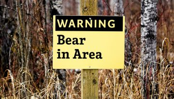 Surviving a Bear Attack